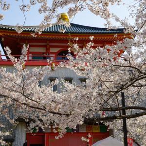 【2020年】和歌山の桜の名所「紀三井寺」|見頃や開花情報、アクセスなどを紹介!