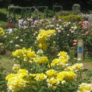 【2020年】大阪のバラの名所「靭公園」 見頃やバラ祭、アクセスなどを紹介!