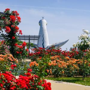【2020年】大阪のバラ園「万博記念公園 平和のバラ園」|見頃やアクセスを紹介!