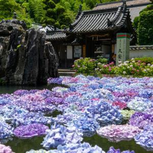 【2020年】池に紫陽花(あじさい)が浮かぶお寺「久安寺」 見頃やアクセスなどを紹介!