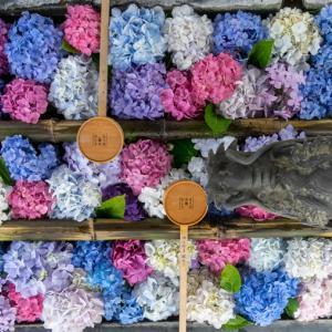 【2020年】京都の紫陽花(あじさい)名所「柳谷観音 楊谷寺」|見頃やアクセスなどを紹介!