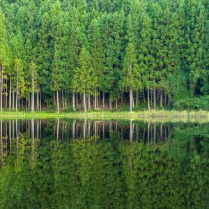 緑の世界を映し出す神秘の鏡池「龍王ヶ渕」おすすめの時期やアクセスを写真で詳しく紹介!