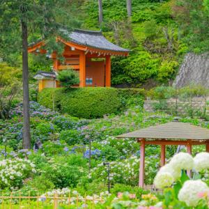 【2021】京都でおすすめの紫陽花(あじさい)の名所7選 見頃・開花情報・アクセスまとめ