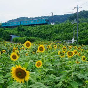【奈良旅行記】五條市上野町ひまわり園で電車とひまわり撮ってきた|2019年8月