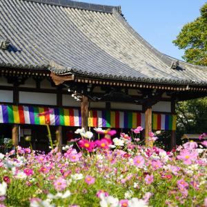【2019年】奈良のコスモス園「般若寺~コスモス寺~」|見頃や開花情報、アクセスなどを紹介!