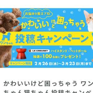 ワンちゃん猫ちゃん投稿キャンペーン