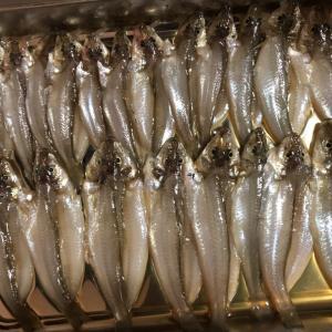 0928片瀬漁港楽しい釣り日記
