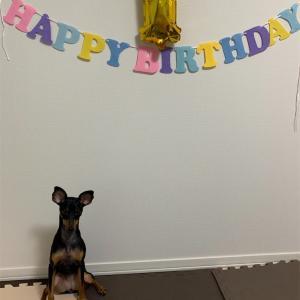 ルナついに1歳になりました🎂誕生日会の様子です