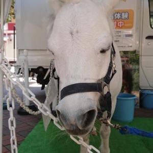 乗馬クラブの小春ちゃん