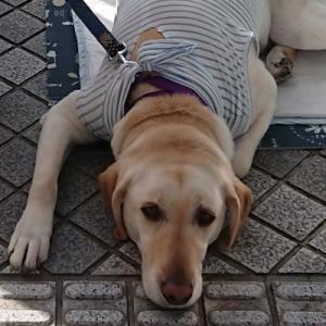 介助犬の募金をしていました。