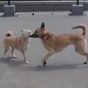 【動画】サンちゃんと走りまわるまる子ちゃん
