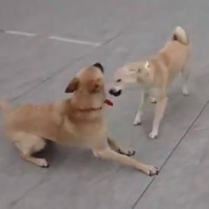 【動画あり】サンちゃんと走り回って超幸せなまる子です!