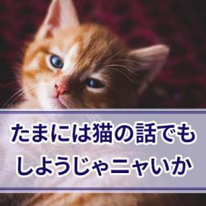 猫に関する豆知識をつらつら書いていく ねこの語源やネコ目について