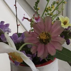 お花達にほっこりと