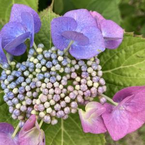 花の写真を真上から撮る
