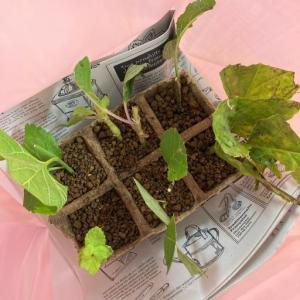 ハーブを学ぶ 植物と水について