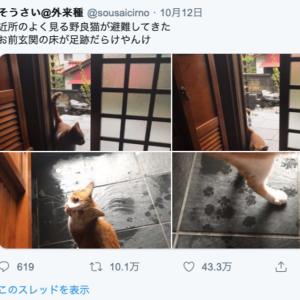 台風で野良猫も避難….これは迎え入れてあげるしかない