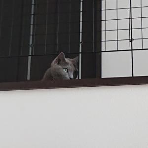 九頭竜川          あれ?!