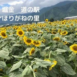 【堀金 道の駅】ほりがねの里は春と夏にインスタ映え写真が撮れるオススメスポット。