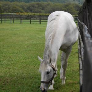 ローレルクラブ募集馬視察ツアー2日目⑥種牡馬見学とライトニングレイ