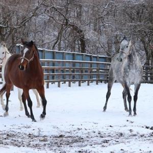 ママさん達と雪