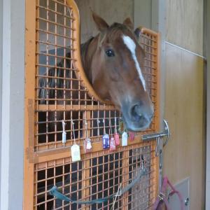 AERUの功労馬たち