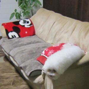 抱き枕?   モコとココ