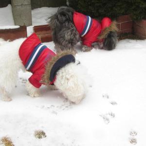 庭ラン「雪の食べ放題?」  モコとココ