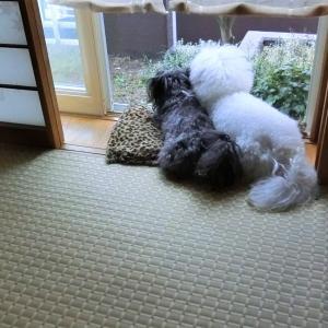 雨がやんだよ!  モコとココ