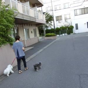 近所の散歩  モコとココ
