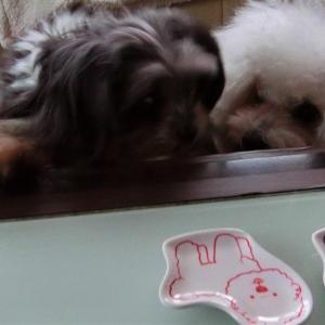 ひとりめし 「うどん、いなりセット」  モコとココ