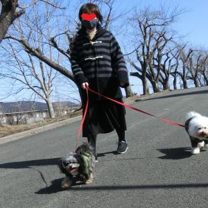 散歩と KFC「とりの日パック」(八戸市湊高台 東運動公園) モコとココ
