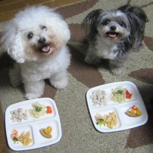 モコ10歳バースデー  モコとココ