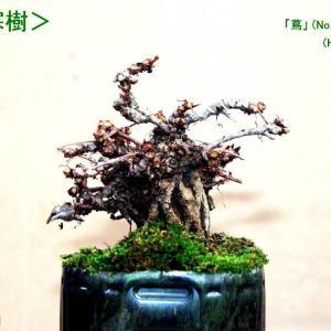 「蔦・寒樹」 2鉢