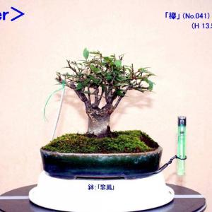 """「ブツ切り欅」""""芽摘み""""-5回目"""