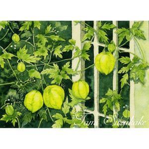 絵画販売・ポストカード「花7・フーセンカズラ」選べる2枚セット