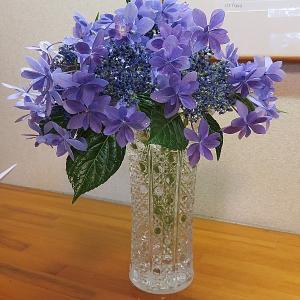 今日の切り花、紫陽花(ダンスパーティー)