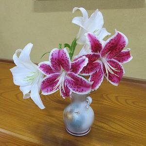今日の切り花「百合の花」