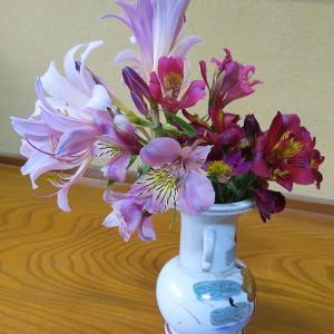 今日の切り花「ナツスイセン・アルストロメリア」