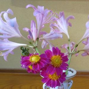 今日の切り花「ナツスイセン・ダリア」