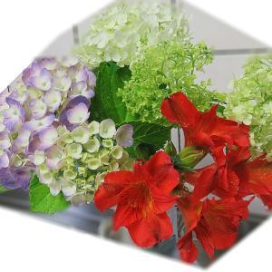 今日の切り花「紫陽花・アルストロメリア」