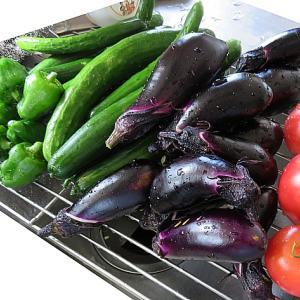夏野菜ドンドン収穫中