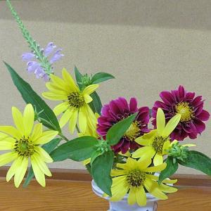 今日の切り花「ハナトラノオ・ヘリアンサス・ダリア」