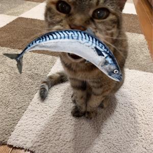 19歳猫はなちゃん&コストコパンケーキ、いくらおにぎり&江國香織「彼女たちの場合は」