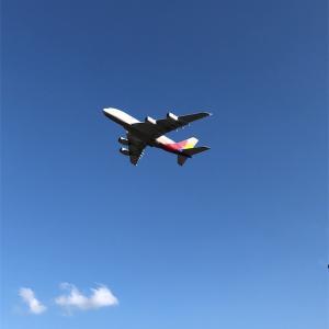 飛行機が見える公園【さくらの山公園】に行ってきた!