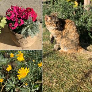 庭の花&キャベツメンチ