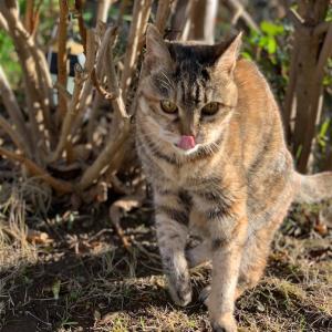 19歳猫はなちゃん&cacaotiergokanのカカオサンド