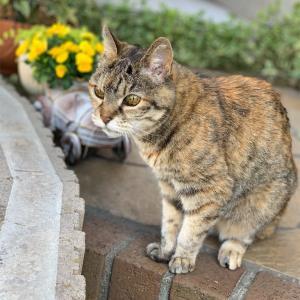 19歳猫&庭の花