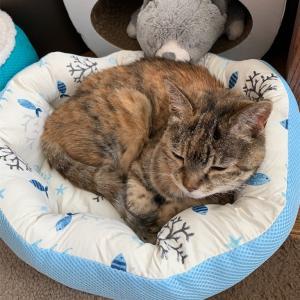 猫用ベッド&20歳猫はなちゃん&読書記録