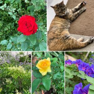 庭の花&20歳猫&女子会